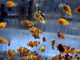 Колиета с жива рибка - моден хит сред младите китайки